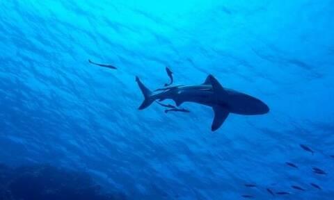 Καρχαρίας άρπαξε 10χρονο αγόρι από σκάφος: Δείτε πώς σώθηκε