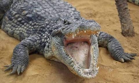 Κροκόδειλος δάγκωσε 6χρονο στο κεφάλι και προσπάθησε να το πνίξει (pics)