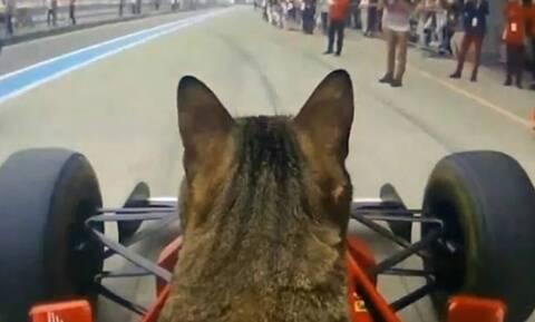 Γάτα έγινε «πιλότος» σε μονοθέσιο της Formula 1 (vid)