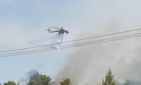 Συναγερμός στην Πυροσβεστική: Μεγάλες φωτιές σε Μυτιλήνη, Κιάτο και Μάνη