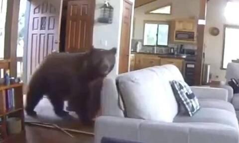 Μεγάλη αρκούδα διαλύει την πόρτα σπιτιού και μπουκάρει μέσα (pics+vid)