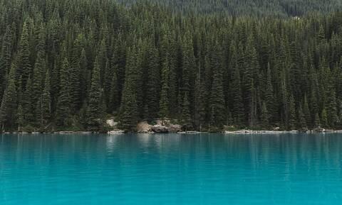 Λίμνη ήταν γεμάτη από νεκρά ψάρια για ανεξήγητο λόγο (vid)
