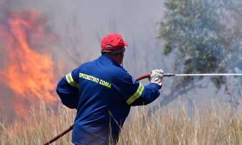 Φωτιά ΤΩΡΑ στη Φιγαλεία Ηλείας