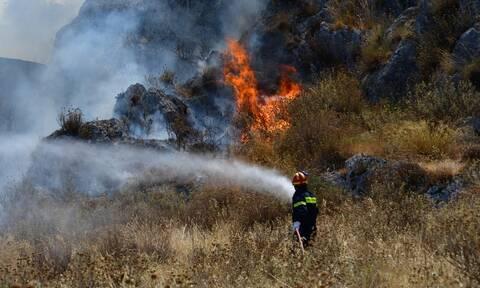 Φωτιά στη Ζαχάρω Ηλείας
