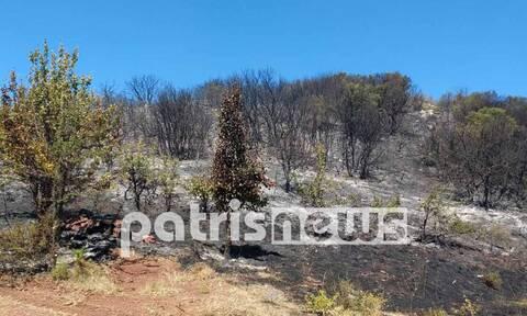 Ηλεία: Φωτιά στη Ζαχάρω - Θρίλερ με νεκρό άνδρα