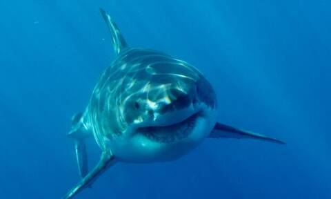 Βίντεο από τη στιγμή της επίθεσης λευκού καρχαρία! (vid)
