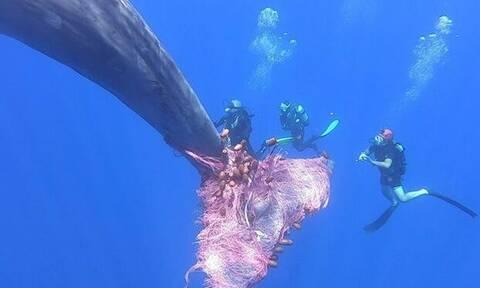 Κι όμως! Αυτοί οι άνθρωποι έσωσαν μια φάλαινα από… πνιγμό! (vid)