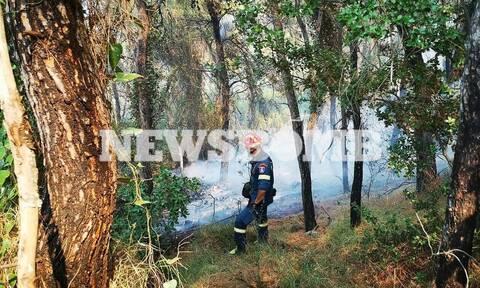 Φωτιά στις Κεχριές: Αρχηγός της Πυροσβεστικής στο Newsbomb.gr - «Δεν θα σβήσει εύκολα»