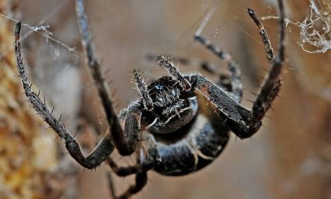 Συναγερμός στην Πάτρα για τη μαύρη αράχνη: Βρέφος στη ΜΕΘ μετά από τσίμπημα