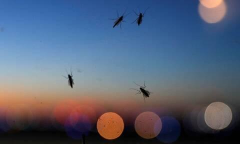Ιός Δυτικού Νείλου: Σε ποιες περιοχές εμφανίστηκαν κρούσματα – Κοινό σύμπτωμα με τον κορονοϊό