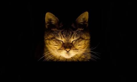 Η γάτα της Αγιάς Σοφιάς - Ζει 16 χρόνια στη Μεγάλη Εκκλησιά