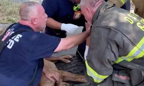 Βίντεο: Ήρωες πυροσβέστες κάνουν τεχνητή αναπνοή σε… σκύλο