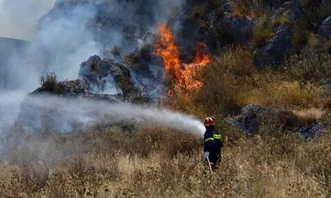 Φωτιά στην Ηλεία: Μαίνεται η φωτιά στο Γραμματικό - Δεν απειλούνται κατοικημένες περιοχές