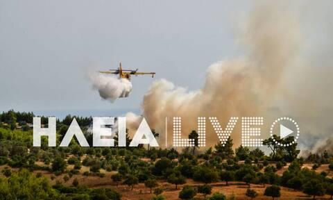 Φωτιά: Σύλληψη για εμπρησμό στην Ηλεία - Η εικόνα σήμερα σε Γραμματικό-Κεχριές