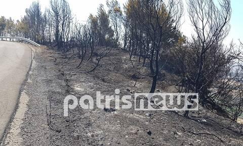 Ηλεία: Καμένη γη άφησε πίσω της η πυρκαγιά στα χωριά της Ολυμπίας – Θλιβερές εικόνες