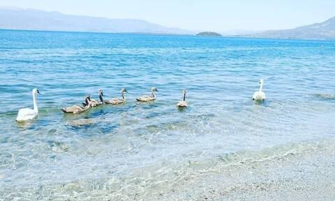 Φθιώτιδα: Μοναδικές εικόνες αντίκρισαν λουόμενοι στην παραλία Ασπρονερίου