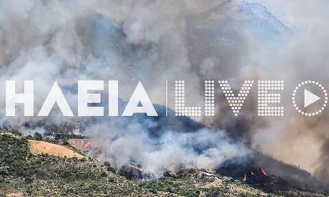 Φωτιά στην Ηλεία - Καίει δασική έκταση (pics)