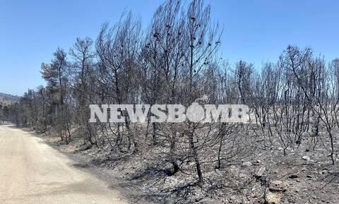 Αυτοψία Newsbomb.gr - Φωτιά Κεχριές: Αποκαρδιωτικές εικόνες από την καταστροφική πυρκαγιά