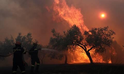 Φωτιά στην Ηλεία: Πιθανούς εμπρησμούς εξετάζουν Πυροσβεστική και Αστυνομία