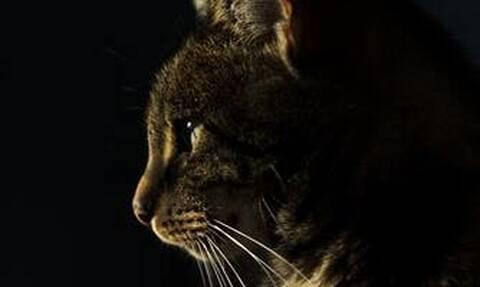 Βρετανία: Γάτος βρέθηκε θετικός στον κορονοϊό