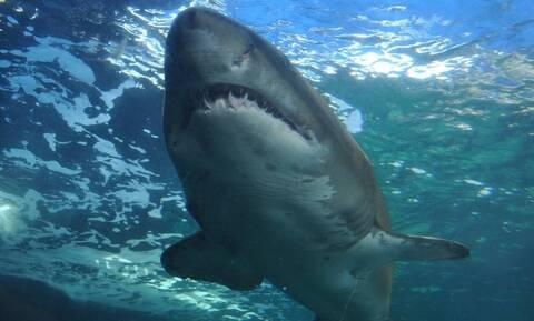 Καρχαρίας κατασπάραξε κολυμβήτρια (pics)