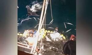 Ψαράδες σηκώνουν τα δίχτυα, τα χάνουν και βουτάνε αμέσως στο νερό (video)