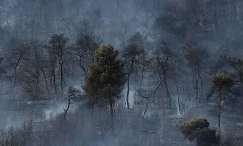 Ελλάδα: 51 δασικές πυρκαγιές εκδηλώθηκαν το τελευταίο 24ωρο