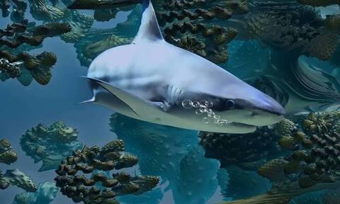 ΗΠΑ: Λευκός καρχαρίας σκότωσε 63χρονη κολυμβήτρια