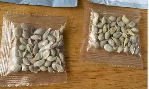 Μυστήριο με σπόρους που φτάνουν σε σπίτια: «Προσοχή μην τους φυτέψετε» (pics)