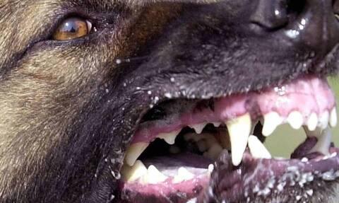 Θεσσαλονίκη: Μήνυση υπέβαλε η οικογένεια του 65χρονου που σκοτώθηκε από επίθεση αγέλης σκύλων