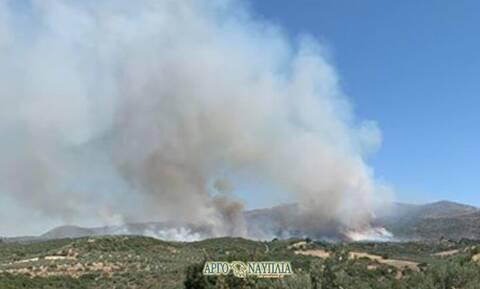 Φωτιά ΤΩΡΑ: Ανεξέλεγκτη η πυρκαγιά στην Επίδαυρο - Οι πρώτες εικόνες