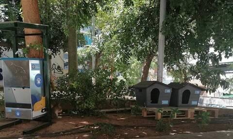 Δήμος Αθηναίων: Τοποθετούνται σπιτάκια για γάτες σε γειτονιές της πόλης