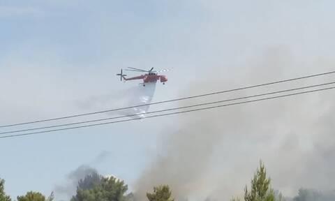 Φωτιά ΤΩΡΑ στη Μάνη - Καίει δασική έκταση