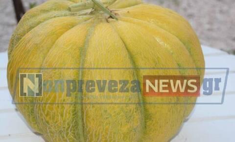 Πρέβεζα: Πεπόνι-γίγαντας έγινε viral (pics)