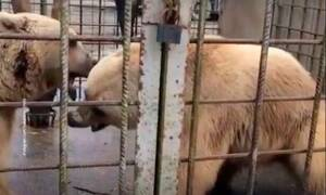 Τραγωδία σε ζωολογικό κήπο - Αρκούδες κατασπάραξαν 11χρονο