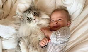 Δείτε πόσους followers έχει αυτή η γάτα στο Instagram