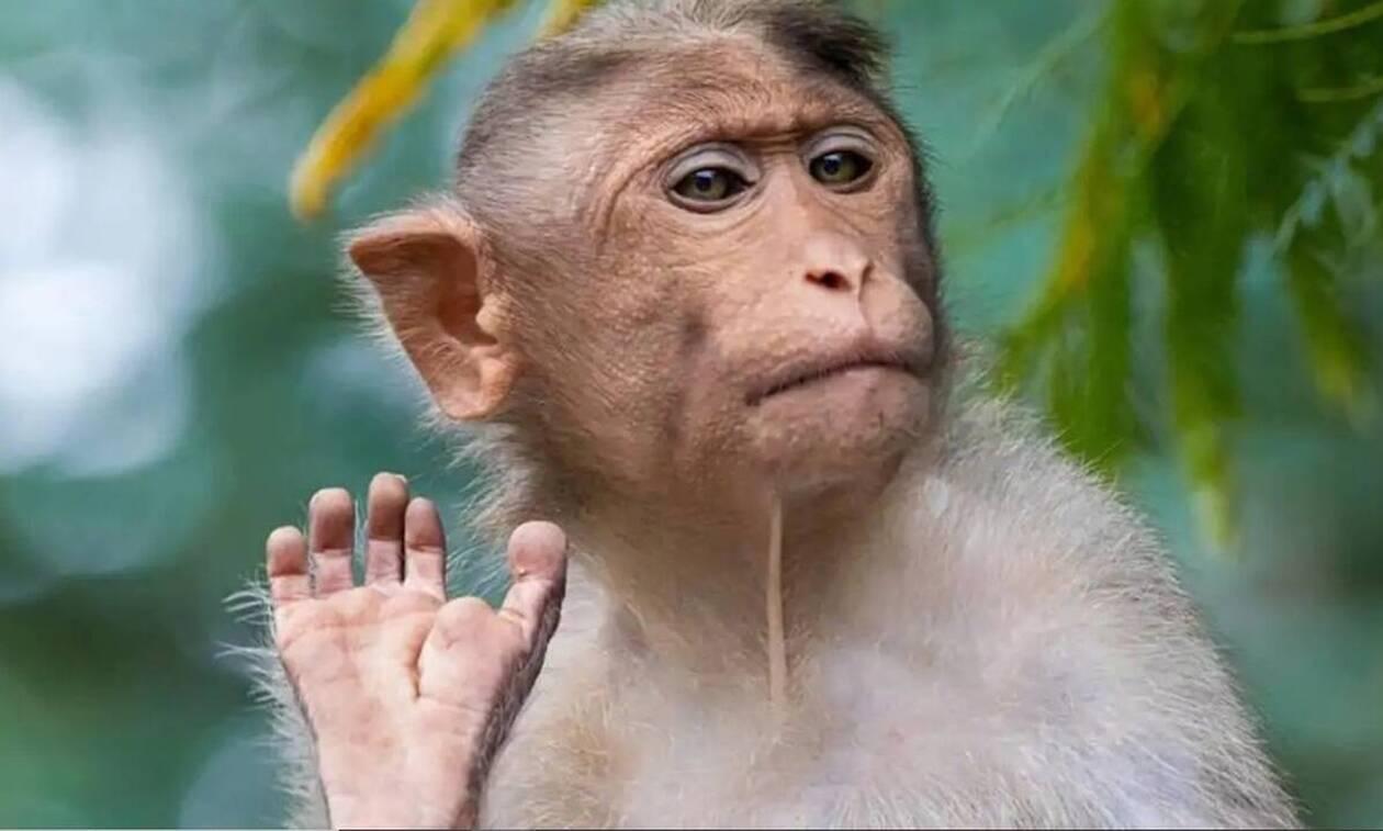 Νεαρός έδειξε το μεσαίο δάχτυλο σε μαϊμού - Το πλήρωσε ακριβά (vid)