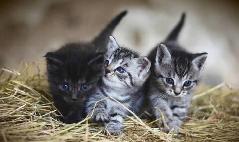 Αυτές είναι οι πιο παιχνιδιάρες γάτες (vid)