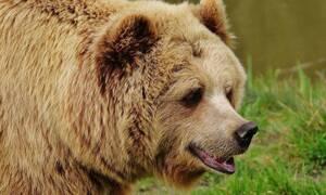 Αρκούδα βρέθηκε κοντά σε αεροπλάνο και… επιβιβάστηκε (vid)