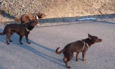 Δεν ξανάγινε: Tα 3 σκυλιά στέκονται «τσολιάδες» μπροστά στο αφεντικό τους!