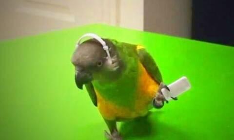 Ο παπαγάλος που είναι πιο έξυπνος από πολλούς… ανθρώπους! (vid)