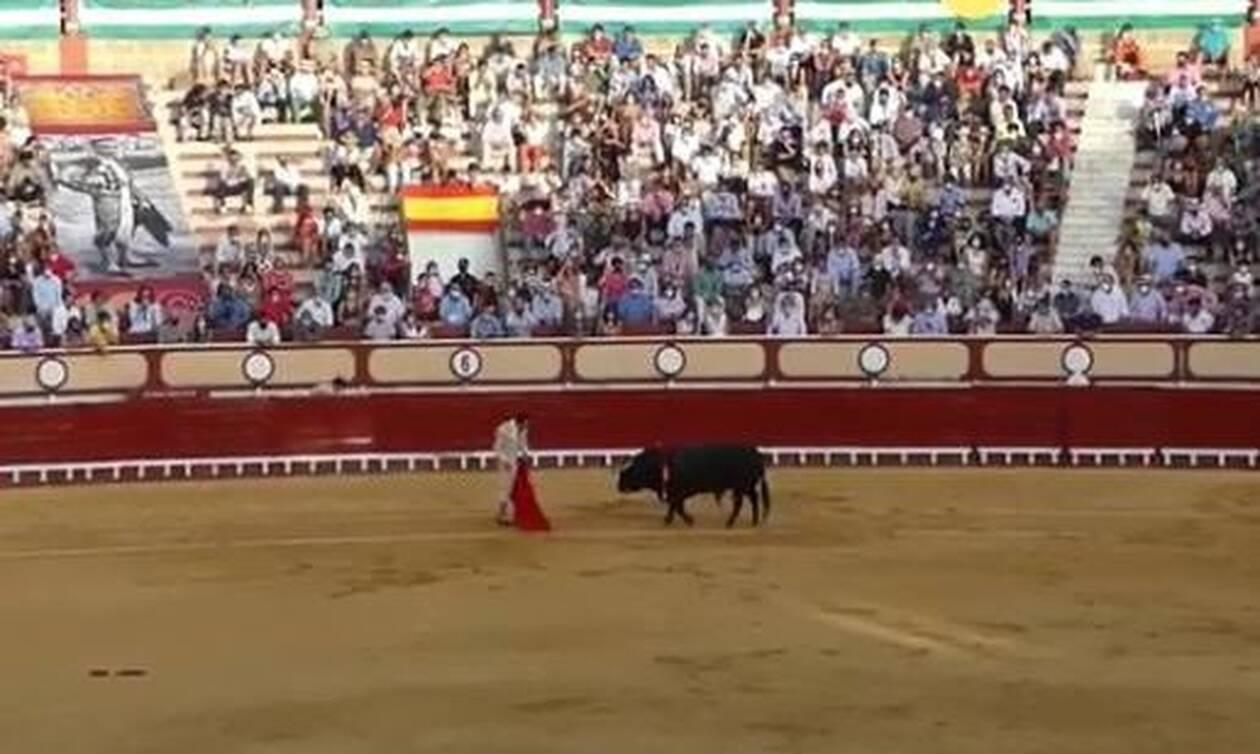 Η εκδίκηση του ταύρου: Κάρφωσε τον ταυρομάχο κατευθείαν στα... οπίσθια