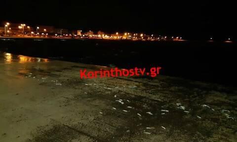 Συγκλονιστικές εικόνες στην Κόρινθο: Παραλία γέμισε με νεκρά ψάρια