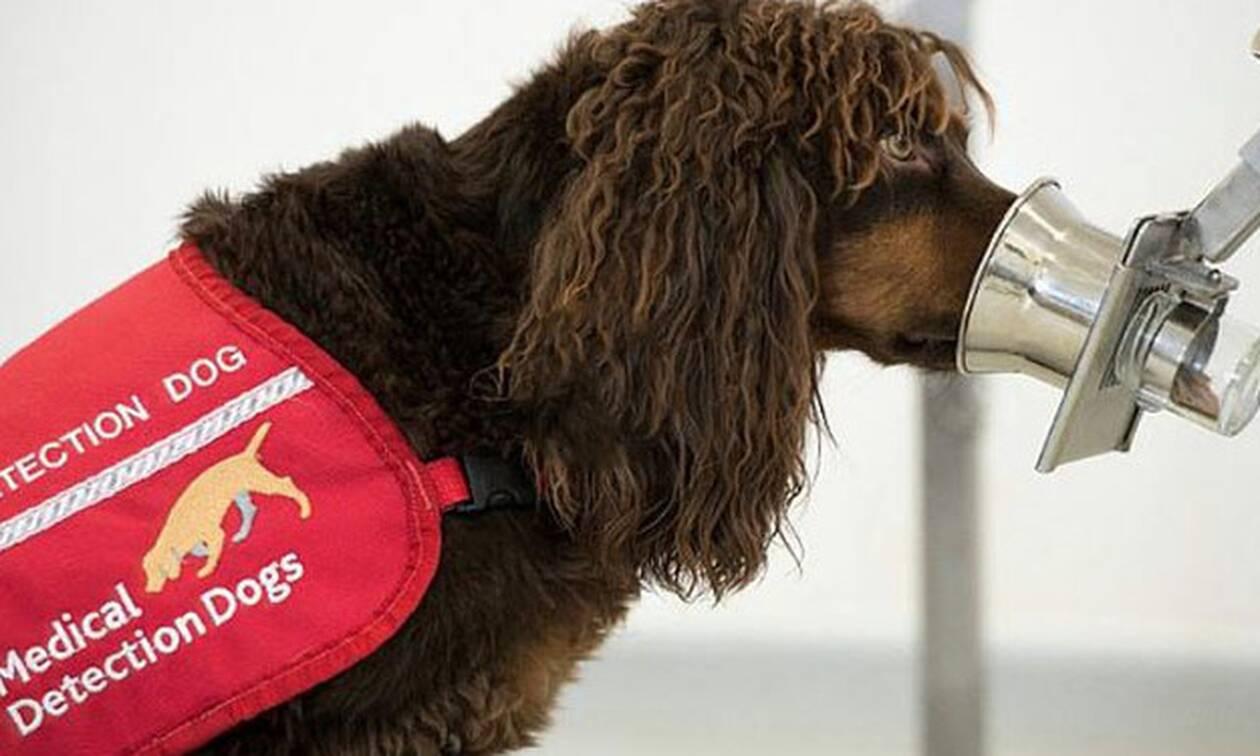 Απίστευτο: Δείτε τους πρώτους σκύλους που «μυρίζουν» τον κορονοϊό!