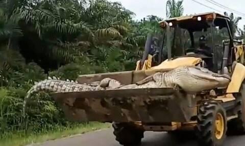 Σοκαριστικές εικόνες: Έπιασαν το «Δαίμονα» - Ζυγίζει 500 κιλά