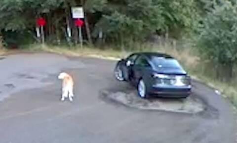 Αποκαλυπτικό βίντεο: Γυναίκα παράτησε τον σκύλο της σε πάρκο (vid)