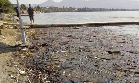 Ερέτρια: Ακατάλληλες οι παραλίες για μπάνιο - Γέμισαν φερτά υλικά (pics)