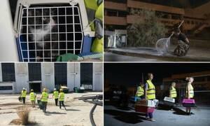Бездомных кошек, отловленных в аэропорту Эллинико, отправят на «усыновление»