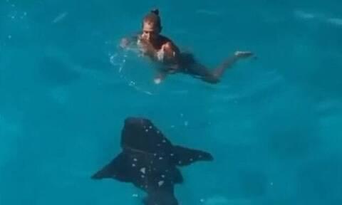 Γυναίκα έκανε βουτιά στη θάλασσα τη στιγμή που περνούσε καρχαρίας (pics+vid)