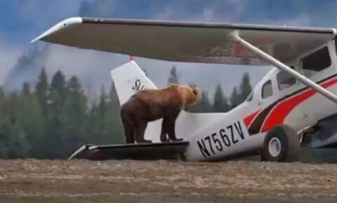 Φοβερό: Αρκούδα σταματάει την απογείωση αεροπλάνου!